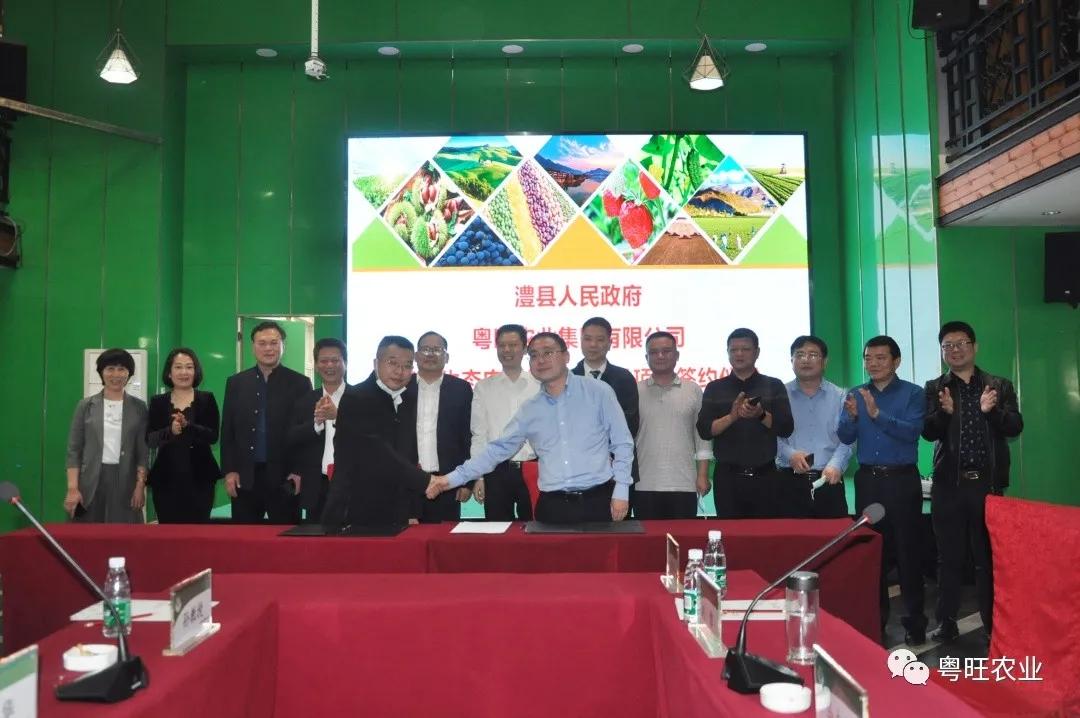 签约了!粤旺和澧县签订10亿元生态农业经济区项目